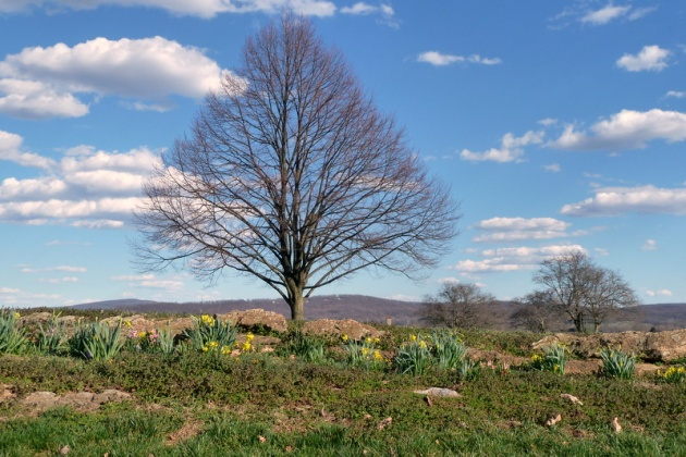 Springtime at Antietam National Battlefield